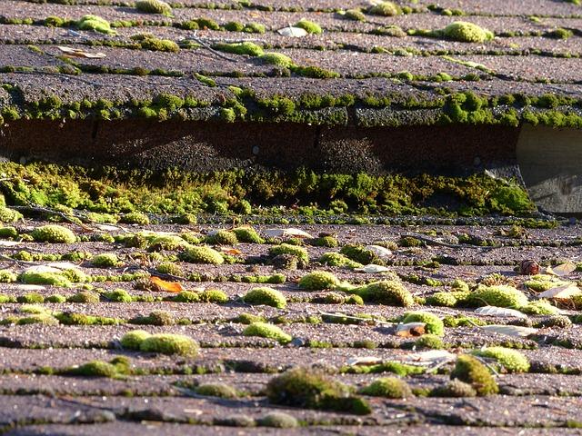 La mousse, l'ennemi de votre toiture