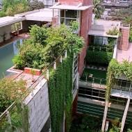 La toiture végétale, pour une maison écologique !